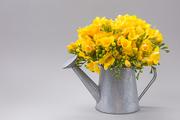 Flower 246