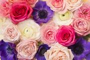 Flower 249
