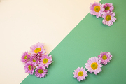 Flower 254
