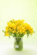 Flower 173