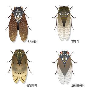 곤충도감 004