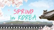 한국의 봄 (Spring) 파워포인트 배경