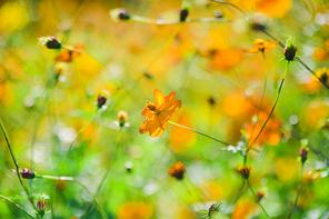 가을풍경 063