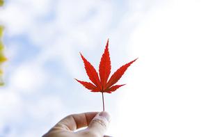 가을풍경 127