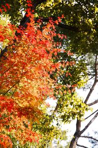 가을풍경 139