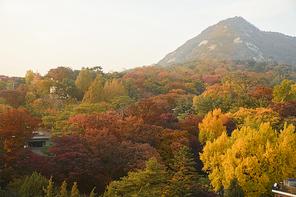 가을풍경 245