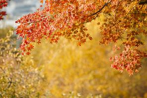가을풍경 316