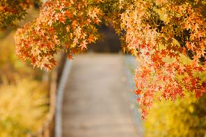 가을풍경 319