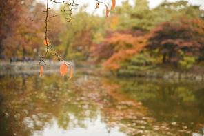 가을풍경 350