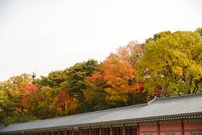 가을풍경 362