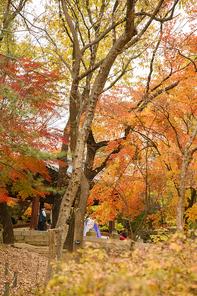 가을풍경 372