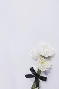 국화 018