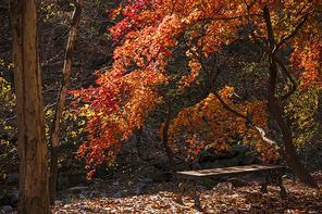 가을단풍 098