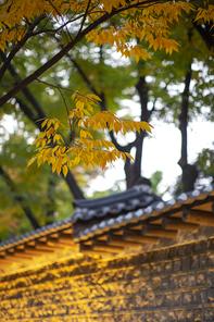가을의 소리 021