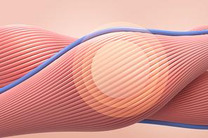 근육의 섬유 조직