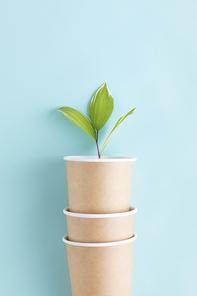 꽃과 식물 - 일회용 종이컵들 안에 있는 나뭇잎