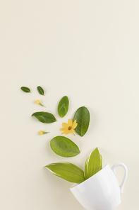 꽃과 식물 - 머그컵에서 나오는 나뭇잎과 꽃