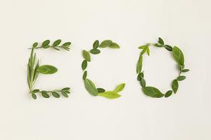 꽃과 식물 - 나뭇잎으로 적힌 ECO 글씨