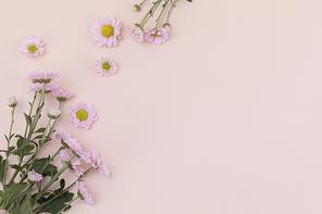 꽃과 식물 - 분홍색 국화 꽃 프레임