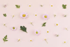 꽃과 식물 - 분홍색 국화 꽃과 나뭇잎 패턴