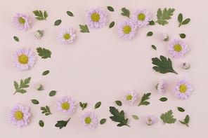 꽃과 식물 - 분홍색 국화 꽃과 나뭇잎 패턴 프레임