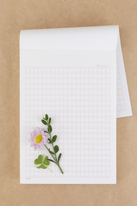 꽃과 식물 - 원고지 위에 놓여진 분홍색 국화 꽃