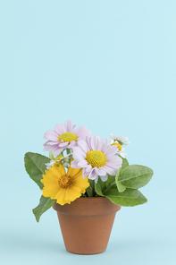 꽃과 식물 - 화분에 담겨진 꽃과 나뭇잎