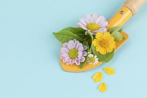 꽃과 식물 - 모종삽 위에 놓여진 꽃과 나뭇잎