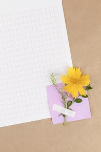 꽃과 식물 - 메모지와 원고지 위에 놓여진 꽃과 나뭇잎