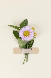 꽃과 식물 - 반창고로 붙여진 꽃과 나뭇잎