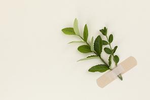 꽃과 식물 - 반창고로 붙여진 나뭇잎