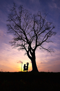 사랑의 나무