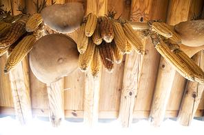 한옥 처마밑 곡식