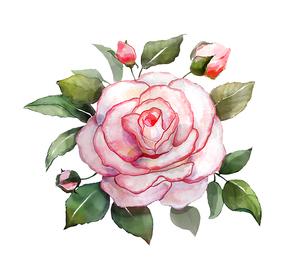 장미꽃 수채화 입니다.
