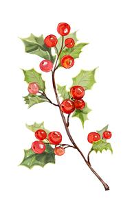 크리스마스 빨간열매, 호랑가시나무 열매 입니다.크리스마스카드