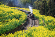 sichuan,scenery,canon,The train.,color,leshan,summertime,Travel.,Country.,Flower.,rural area,shan,fen,tree,agriculture,Daylight.,plant,lawn,The road.