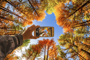 inner mongolia,dam,A cell phone.,scenery,Travel.,canon,color,Mirror Mirror,Extreme Outdoor Photography Competition,It's gold.,landscape,The sun.,Leaf.,light,dawn,bright,beautiful sceneries,branch