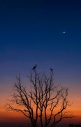 animal,documentary,Olympus.,dawn,The moon.,At night.,No one.,backlight,Nature.,The sun.,twilight,landscape,tree,Darkness.,light,silhouette,Birds.,fall,outdoors,Creepy.