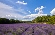 France.,flower,Travel.,canon,color,landscape,outdoors,summertime,rural area,fen,Country.,plentiful,agriculture,pastoral,beautiful sceneries,plant,The farm.,The sky.,Comfortable weather.