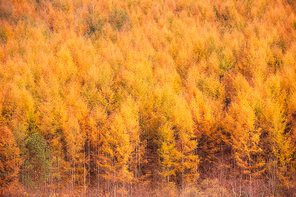 노란색 가을빛으로 물든 나무숲