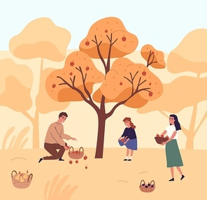 Cute family picking apples in garden vector flat illustration. Happy mother, father and daughter gathering fruits from tree together. People putting organic seasonal growth edible plants in baskets.