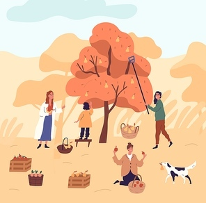 Group of women and kid picking pears from tree at garden vector flat illustration. Funny female during seasonal agricultural work. People working together putting harvest plant to baskets and crates.