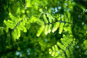 초록 나뭇잎