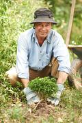 Mature man enjoying planting in his garden