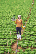 Young female farmer working on cabbage field