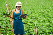Female Vietnamese farmer with cabbage leaves in her hand reading information on digital tablet