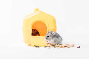 funny fluffy hamster near pet house with one hamster inside on grey