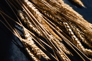 close up of ripe wheat spikelets on dark grey