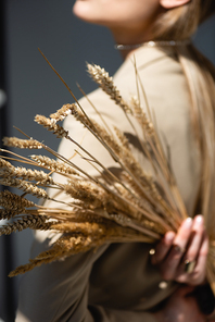 ripe wheat spikelets with woman on blurred and dark grey background