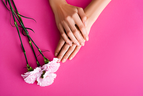 top view of female hands with glossy pastel manicure near carnation flowers on pink background